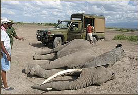Mama elephant brutally killed for her tusks